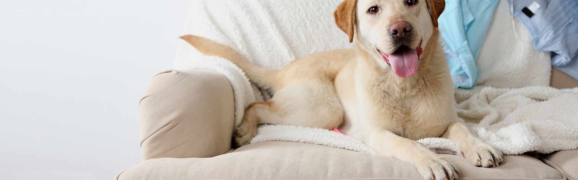 Pet Stain Management in Las Cruces